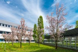 Frühling am Sophien- und Hufeland-Klinikum Weimar